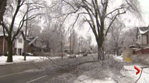 City Trees still feeling the damage from last years ice storm